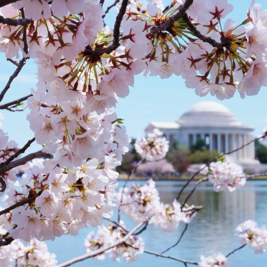 Our favorite Spring Destinations DC