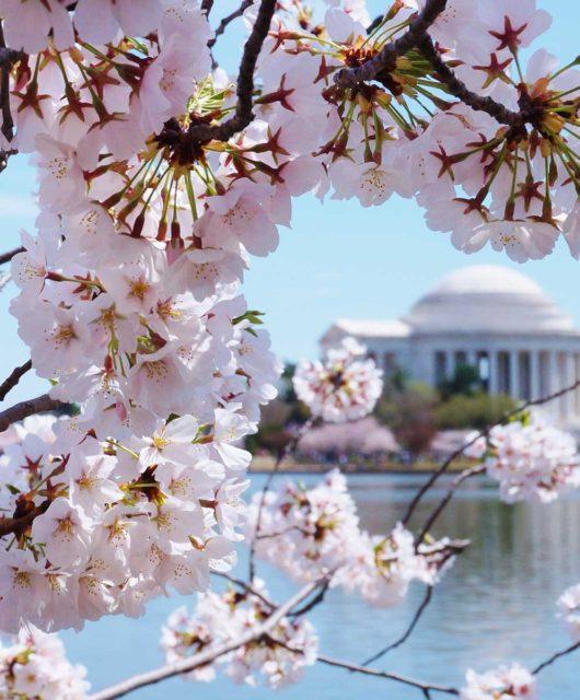 Our favorite Spring Destinations DC