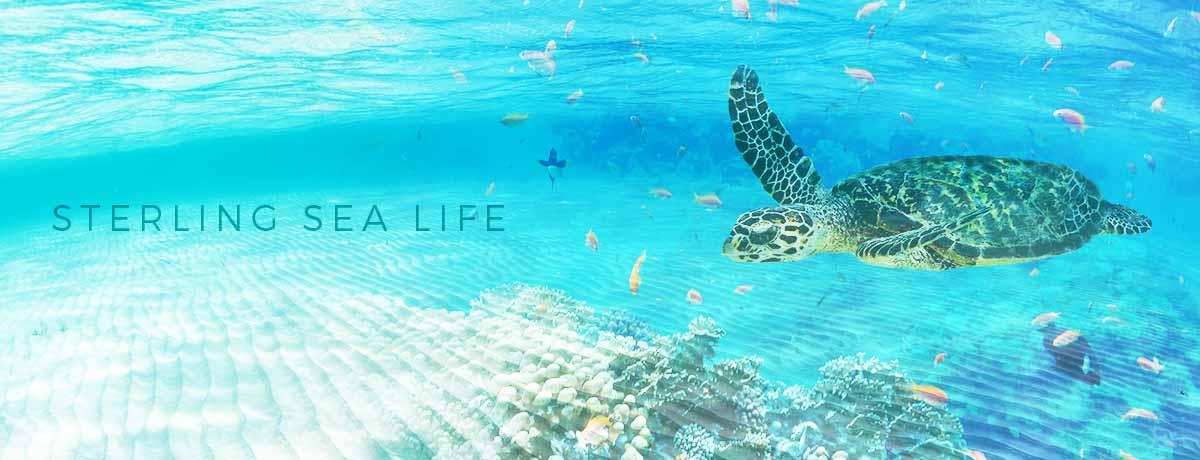 Sterling Sea Life